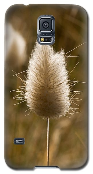 A Beautiful Seed Pod With Beautiful Sun Reflection Galaxy S5 Case
