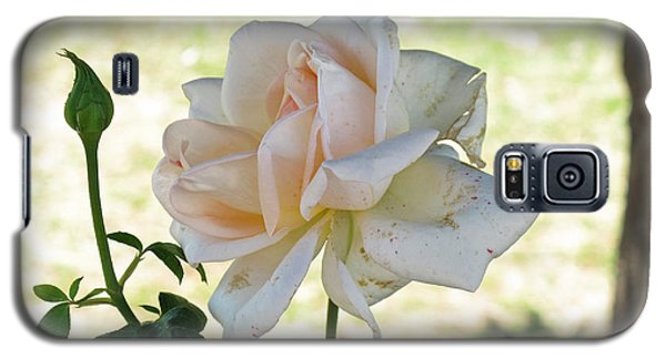 Galaxy S5 Case featuring the photograph A Beautiful White And Light Pink Rose Along With A Bud by Ashish Agarwal