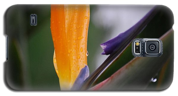 A Bird Of Paradise I Galaxy S5 Case