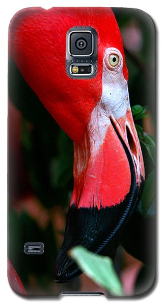 Galaxy S5 Case featuring the photograph A Delicate Shade Of Power by Lon Casler Bixby