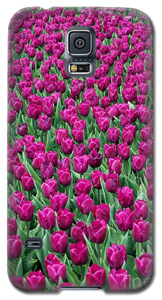 Galaxy S5 Case featuring the photograph A Field Of Tulips by Eva Kaufman