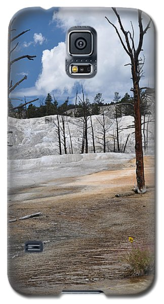 A Flower Blooms In Mammoth Hot Springs Galaxy S5 Case