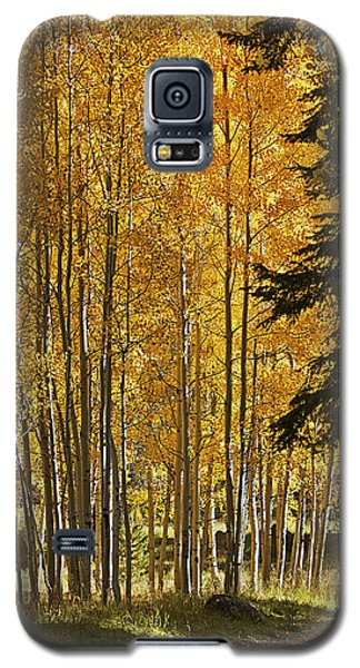 A Golden Trail Galaxy S5 Case by Phyllis Denton