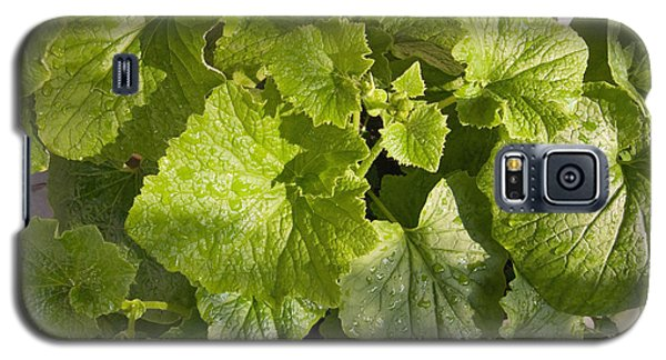 Galaxy S5 Case featuring the photograph A Green Leafy Vegetable Plant After Watering In Bright Sunrise by Ashish Agarwal