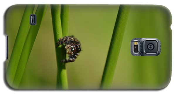 Galaxy S5 Case featuring the photograph A Jumper In The Grass by JD Grimes