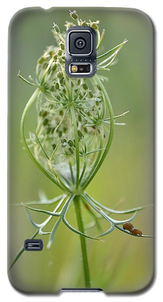 Galaxy S5 Case featuring the photograph A Meal Of Lace by JD Grimes