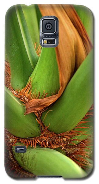 Galaxy S5 Case featuring the photograph A Palmetto's Elbows by JD Grimes