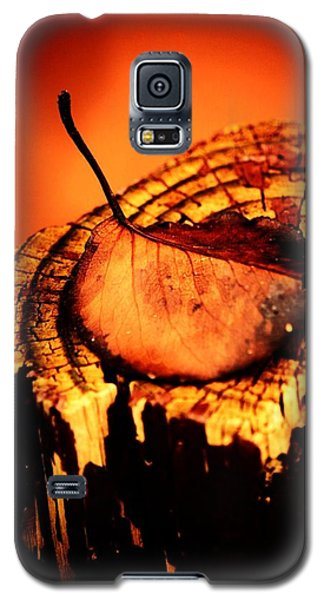 Galaxy S5 Case featuring the photograph A Pose For Fall by Jessica Shelton