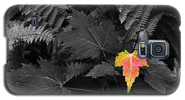 Galaxy S5 Case featuring the photograph A Rare Thing by William Fields
