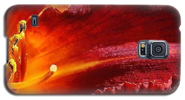 Galaxy S5 Case featuring the photograph A Ray Of Beauty by Bruce Bley