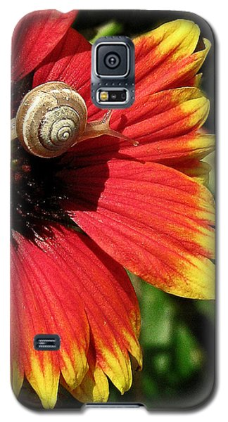 A Snail's Pace Galaxy S5 Case