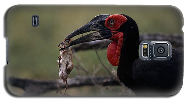 A Southern Ground Hornbill Prepares Galaxy S5 Case