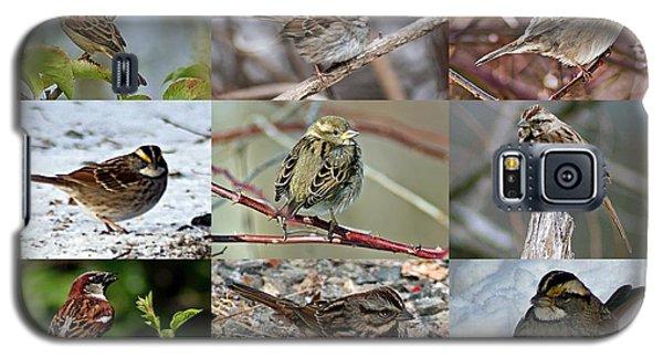 A Study In Sparrows Galaxy S5 Case by Joe Faherty