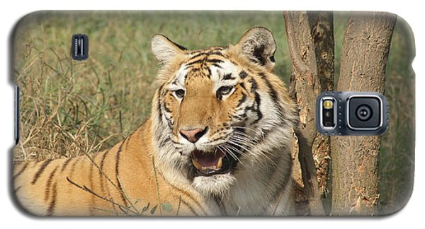 A Tiger Lying Casually But Fully Alert Galaxy S5 Case