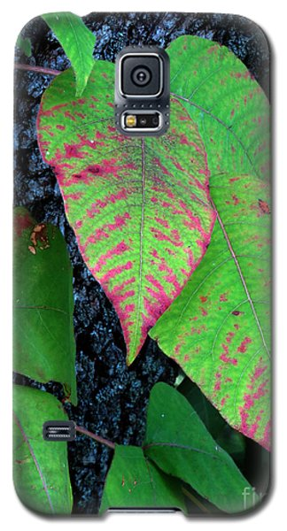 A Touch Of Autumn Galaxy S5 Case by Darleen Stry