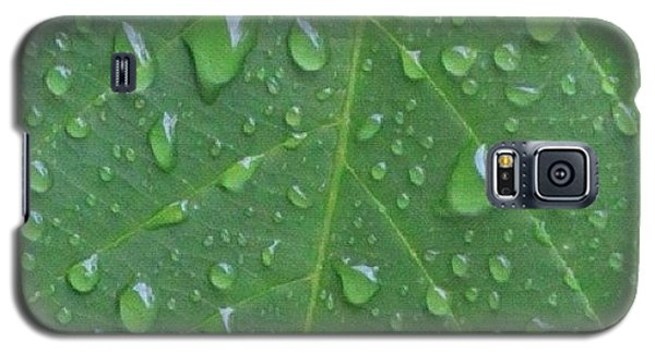 Political Galaxy S5 Case - A Tree Leaf Under The Rain, By My Lens by Ahmed Oujan