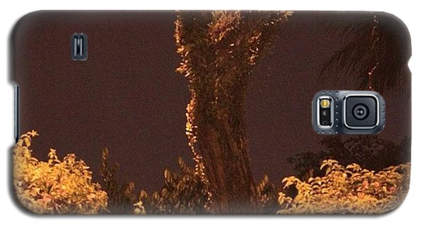 Political Galaxy S5 Case - A Tree Lonely At Night, By My Lens by Ahmed Oujan