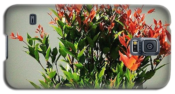Political Galaxy S5 Case - A Tree That Gives Red New Leaves When by Ahmed Oujan