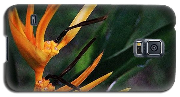 Political Galaxy S5 Case - A Tropical Flower, Humming Birds Feed by Ahmed Oujan
