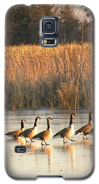 A Walk In The Park  Galaxy S5 Case