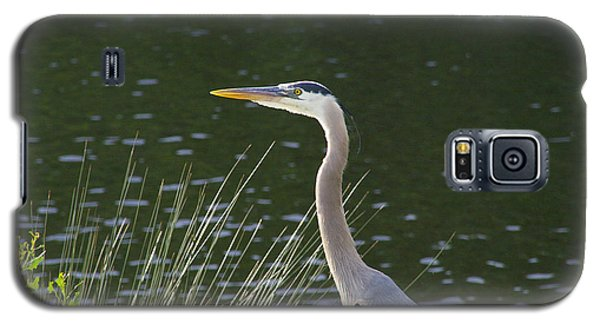 Galaxy S5 Case featuring the photograph Adult Great Blue Heron by Brian Wright