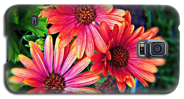 African Daisy Galaxy S5 Case