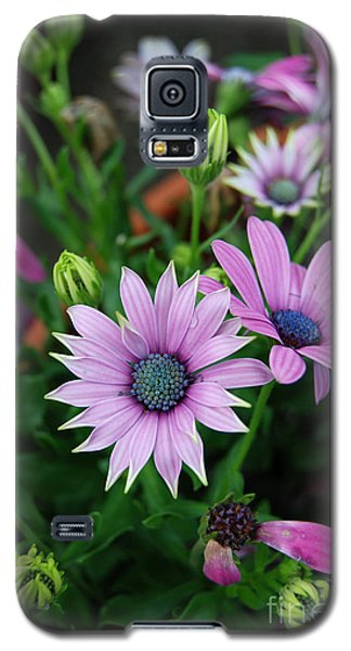 Galaxy S5 Case featuring the photograph African Daisy by Eva Kaufman