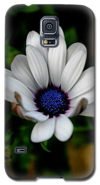 Galaxy S5 Case featuring the photograph African Daisy by Lynne Jenkins