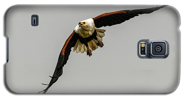 African Fish Eagle Galaxy S5 Case