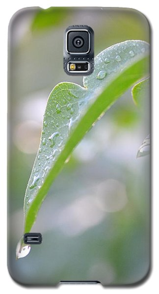 Galaxy S5 Case featuring the photograph After The Rain by JD Grimes
