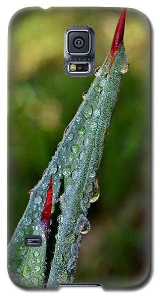 Galaxy S5 Case featuring the photograph Agave Thorn by Werner Lehmann