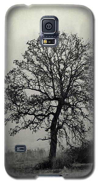 Age Old Tree Galaxy S5 Case by Steve McKinzie