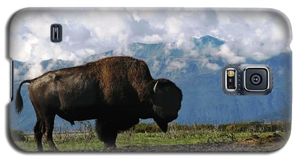 Galaxy S5 Case featuring the photograph Alaskan Buffalo by Katie Wing Vigil