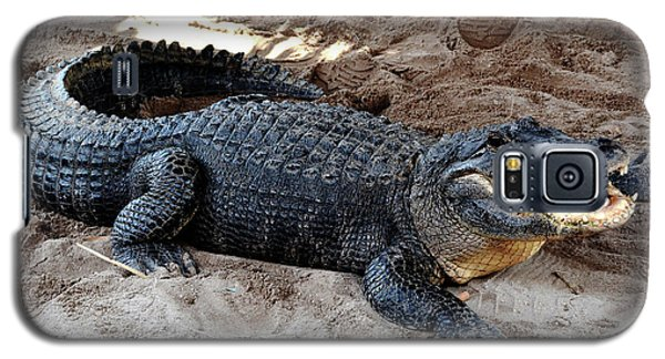 Galaxy S5 Case featuring the photograph Alligator At The Everglades by Pravine Chester