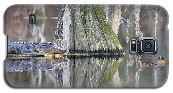 Galaxy S5 Case featuring the photograph Alligator Waiting For Dinner by Dan Friend