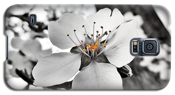 Galaxy S5 Case featuring the photograph Almond Blossom by Marianna Mills
