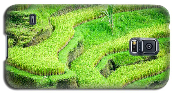 Galaxy S5 Case featuring the photograph Amazing Rice Terrace Field by Luciano Mortula