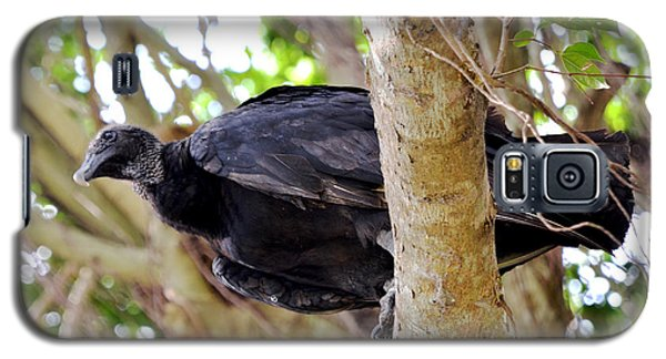 Galaxy S5 Case featuring the photograph Amercan Black Vulture by Pravine Chester