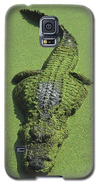 American Alligator Alligator Galaxy S5 Case by Heidi & Hans-Juergen Koch