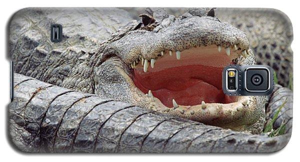 American Alligator Alligator Galaxy S5 Case by Tim Fitzharris