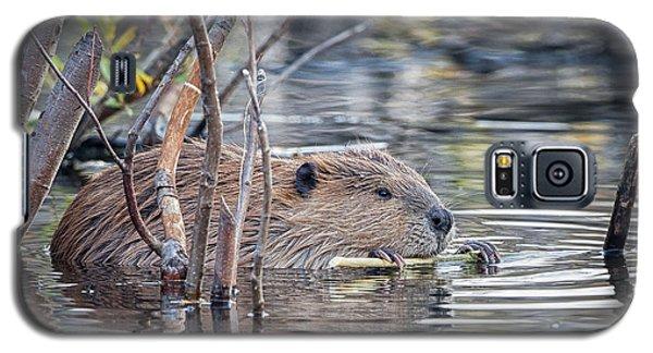 American Beaver Galaxy S5 Case