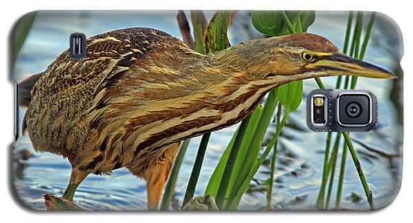 Galaxy S5 Case featuring the photograph American Bittern by Larry Nieland