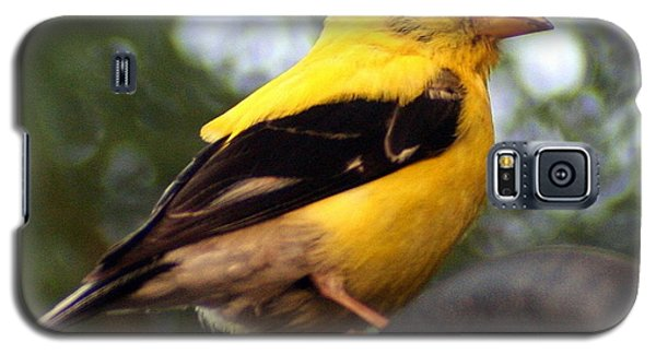 Galaxy S5 Case featuring the photograph American Goldfinch by Laurel Talabere