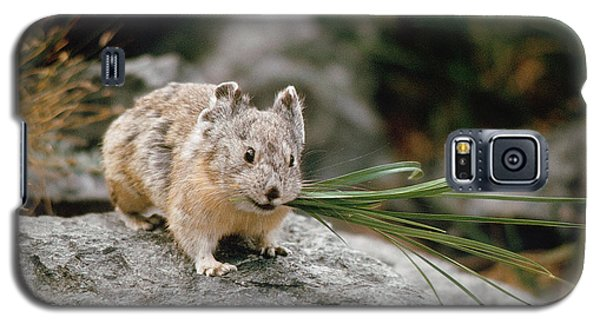 Galaxy S5 Case featuring the photograph American Pika by Doug Herr