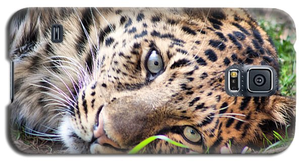 Galaxy S5 Case featuring the photograph Amur Leopard by Lynne Jenkins