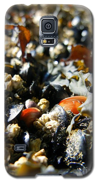 And Cockle Shells Galaxy S5 Case