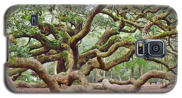 Angel Oak Galaxy S5 Case