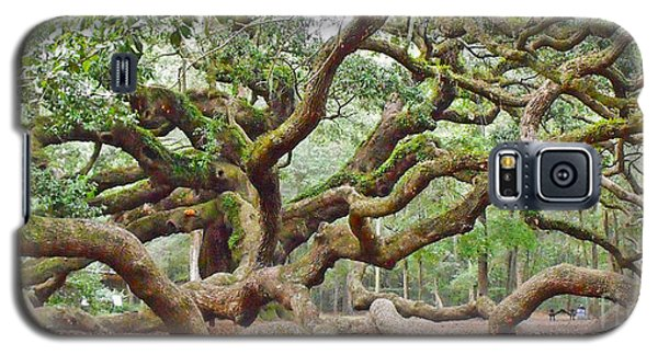 Angel Oak Galaxy S5 Case by Val Miller