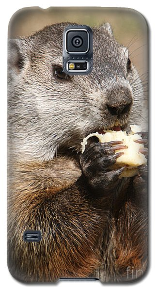 Animal - Woodchuck - Eating Galaxy S5 Case by Paul Ward