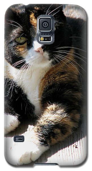 Galaxy S5 Case featuring the photograph Annie Banannie by Rory Sagner